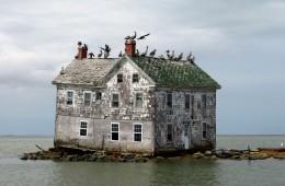 Holland Island Baldeaglebluff