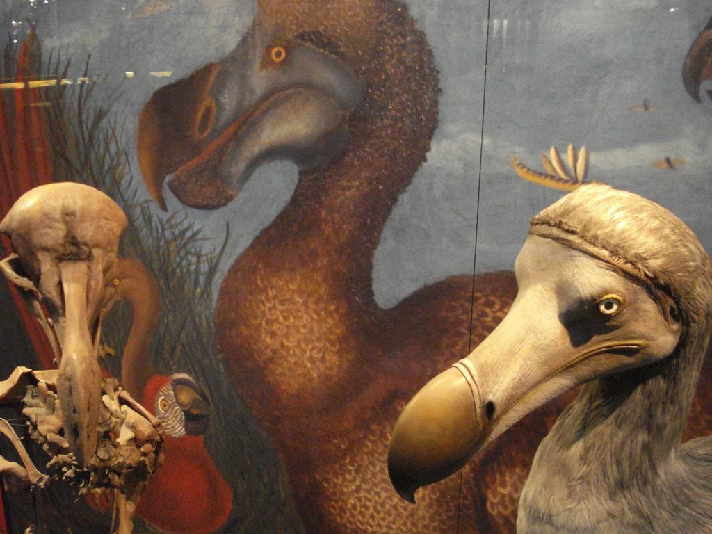 Christian Guthier dodo
